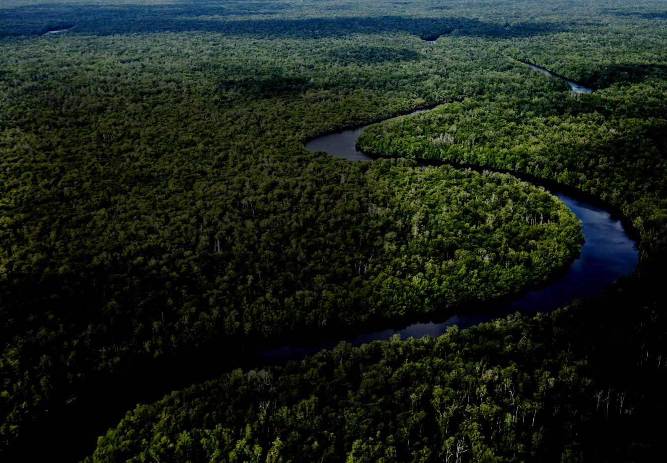 Sungai Sembilang Park in Sumatra.jpg