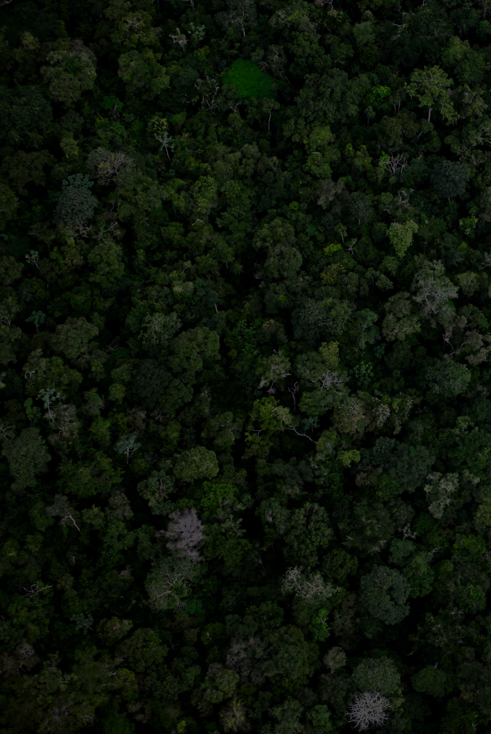 Forest near the BR 163 Amazon Highway.jpg