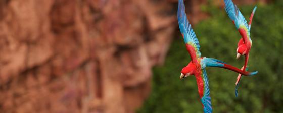 parrots-lrg.png