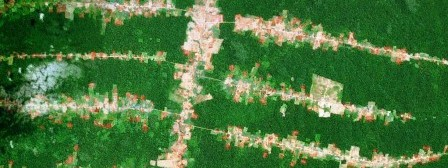 Roads-fishbone-deforestation-Brazil-cropped.jpg