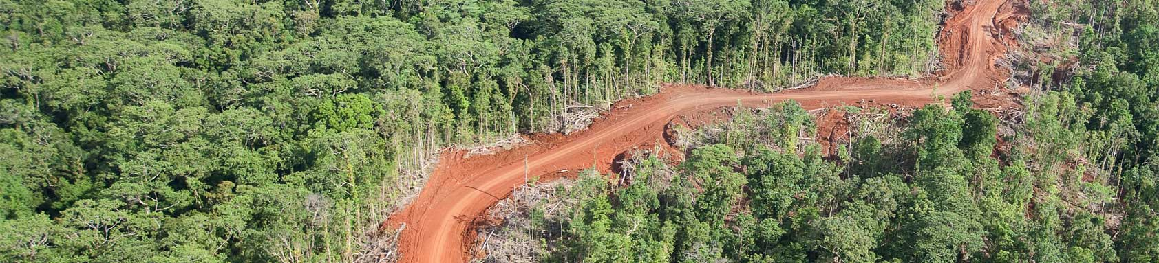 Logging Road in the Forests of Vangunu Island.jpg